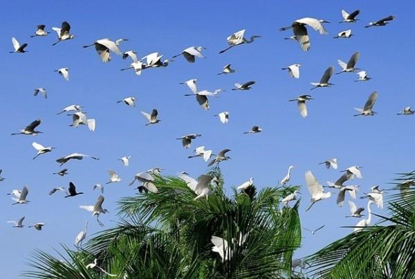 Beautiful birds in Bac Lieu